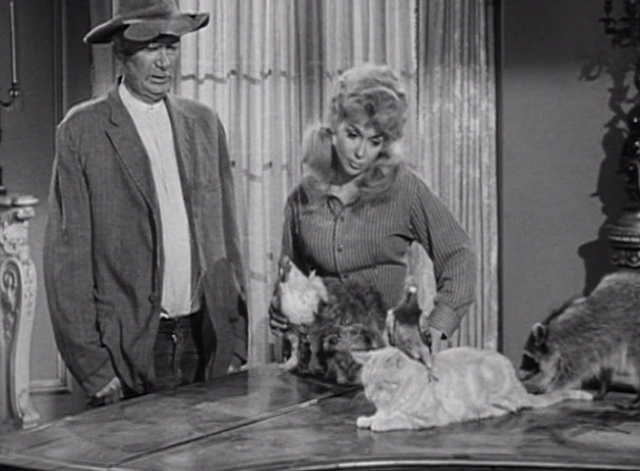 The Beverly Hillbillies - The Clampett's are Overdrawn - Elly May Donna Douglas and Jed Buddy Ebsen with critters including Rusty cat Orangey on table