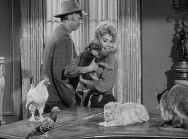 The Beverly Hillbillies - The Clampett's are Overdrawn - happy Elly May Donna Douglas and Jed Buddy Ebsen with critters including Rusty cat Orangey on table