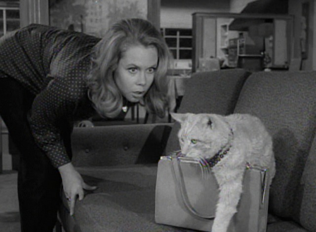 Bewitched - The Catnapper - Orangey cat with purse