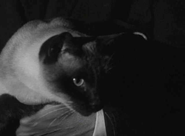 Bewitched - The Cat's Meow Siamese cat in captain's arms