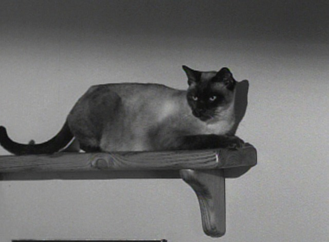 Bewitched - The Cat's Meow Siamese cat on shelf