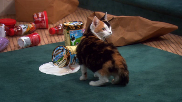 The Big Bang Theory - The Barbarian Sublimation - calico cat eating melted ice cream outside Penny's apartment