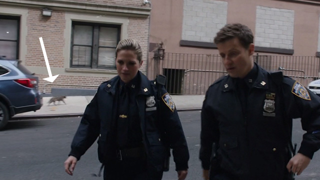 Blue Bloods - My Aim is True - tabby cat passing in background