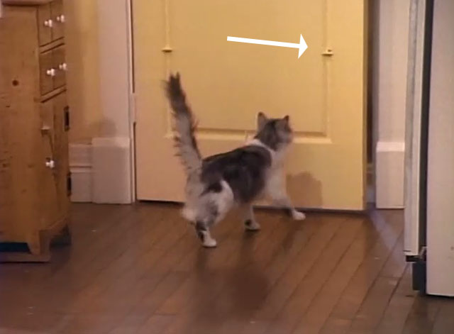 Bob - La Sorpresa - cat Otto approaching door with cat treat on hinge