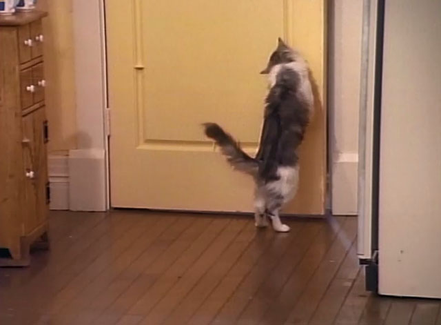 Bob - La Sorpresa - cat Otto pushing on door