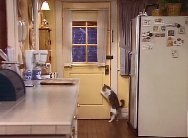 Bob - La Sorpresa - cat Otto closing kitchen door