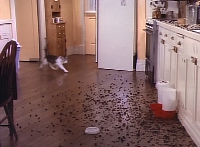 Bob - Mad Dog on 34th Street - cat Otto running into kitchen with dry cat food all over