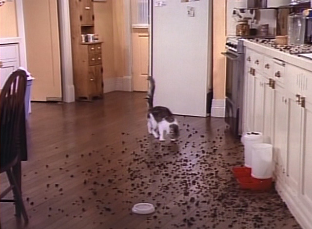 Bob - Mad Dog on 34th Street - cat Otto running into kitchen and eating dry cat food on floor