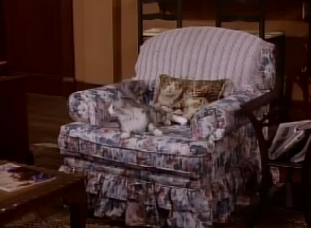 Bob - A Streetcar Named Congress-Douglas - cat Otto lying on chair