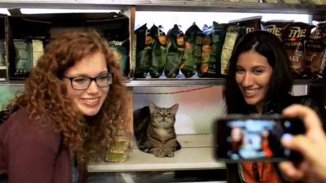 The Bodega - InstaCat Bodega Cat with fans taking selfies