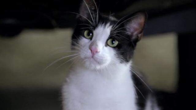 Bones - A Bond in the Boot - cute tuxedo cat looking at agents