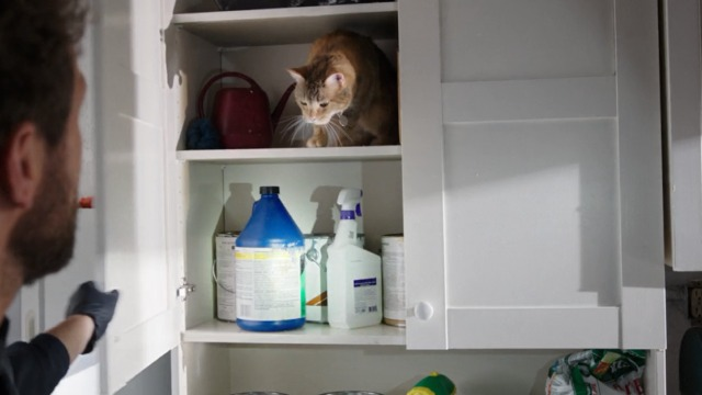 Bones - The Mutilation of the Master Manipulator - orange tabby cat Skinner in cupboard