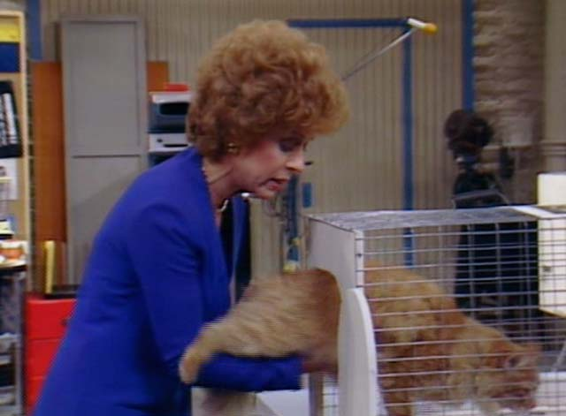 Bosom Buddies - On the Road to Monte Carlo - Ruth Holland Taylor placing long-haired ginger tabby Mr. Whiskers into cage