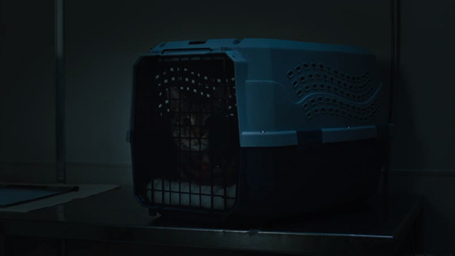 Brain Dead - Wake Up Grassroots tabby cat Zeke in cat carrier in lab