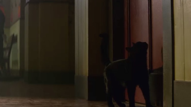 The Chilling Adventures of Sabrina - October Country - black cat Salem outside office door