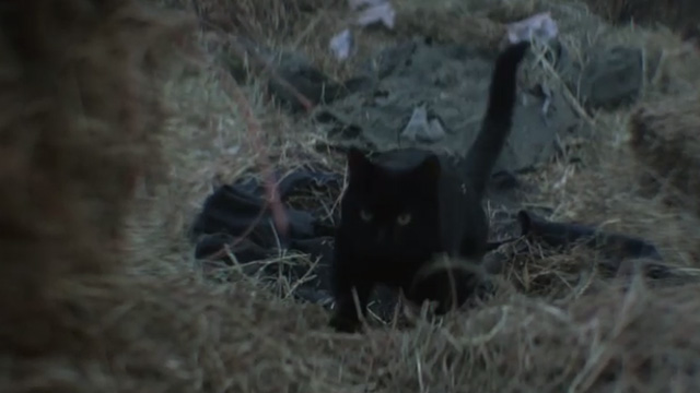 The Chilling Adventures of Sabrina - October Country - black cat Salem
