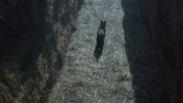 The Chilling Adventures of Sabrina - October Country - black cat Salem leading Sabrina through maze