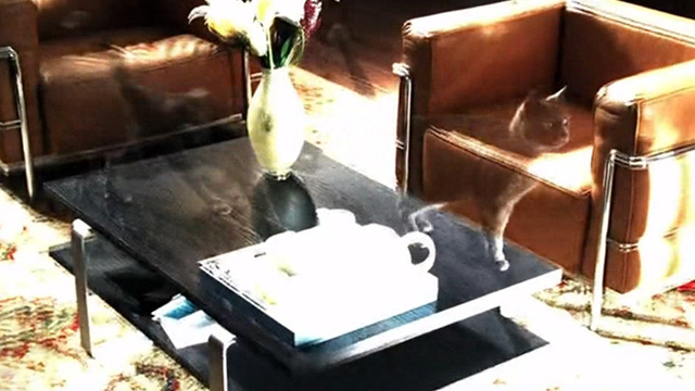 CSI: Crime Scene Investigation - Monster in the Box - ghostly gray cat video on coffee table