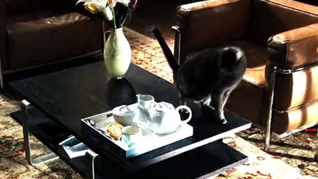 CSI: Crime Scene Investigation - Monster in the Box - gray cat on coffee table