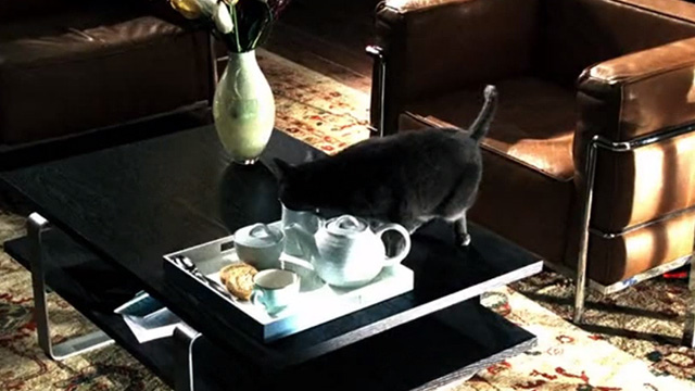 CSI: Crime Scene Investigation - Monster in the Box - gray cat on coffee table with face in cream pitcher