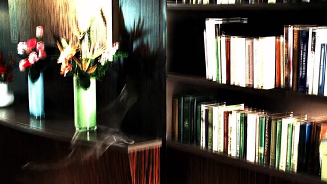 CSI: Crime Scene Investigation - Monster in the Box - ghostly gray cat jumping up to bookshelves