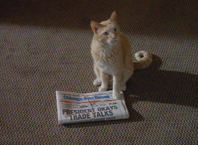 Early Edition - pilot episode Panther orange tabby cat with newspaper