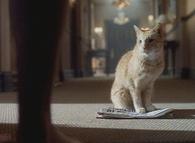 Early Edition - pilot episode Panther orange tabby cat returns with newspaper