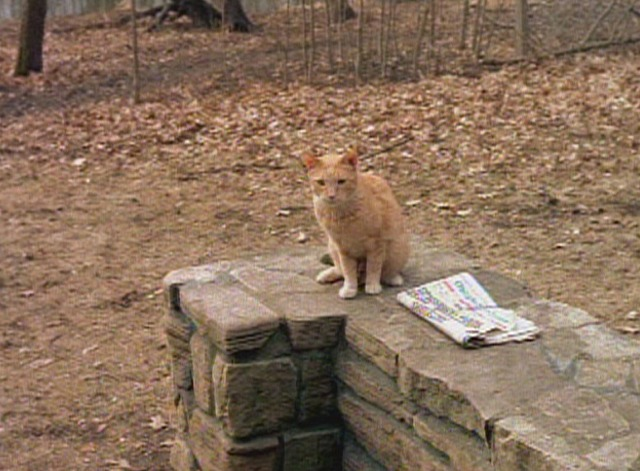 Early Edition - pilot episode Panther orange tabby cat brings paper to cabin