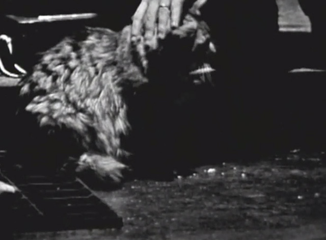 The Ernie Kovacs Show - hand petting long-haired tabby cat