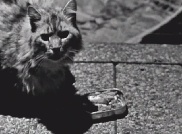 The Ernie Kovacs Show - long-haired tabby cat on sidewalk with open tin of sardines