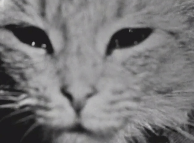 The Ernie Kovacs Show - extreme close up of tabby cat