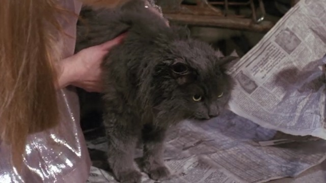 Friends - The One Where Eddie Moves In - Smelly Cat video gray long-haired cat