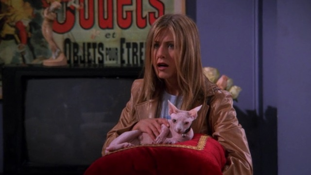 Friends - The One With the Ball - Rachel Jennifer Aniston with Sphynx cat Mrs. Whiskerson on pillow
