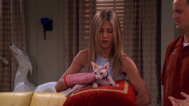 Friends - The One With the Ball - Rachel Jennifer Aniston wearing oven mitts with Sphynx cat Mrs. Whiskerson