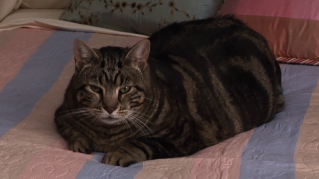 Glee - Rumours - large tabby cat Lord Tubbington Aragon sitting on bed