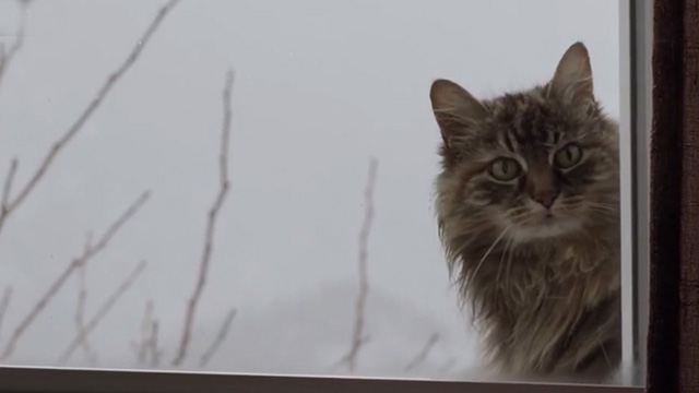 The Good Doctor - Pilot: Burnt Food - long haired cat looking into window
