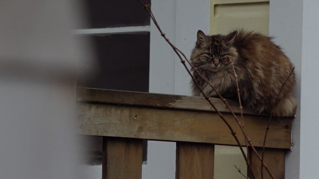The Good Doctor - Pilot: Burnt Food - long haired cat sitting on porch railing