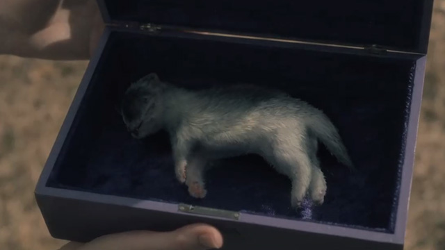 The Haunting of Hill House - Open Casket - dead newborn kitten in box