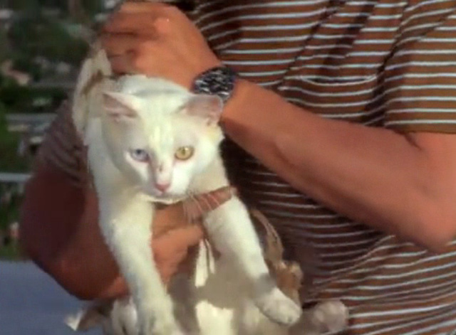 Hawaii Five-0 - King Kamehameha's Blues - white cat Sam with blue and yellow eyes on roof in harness