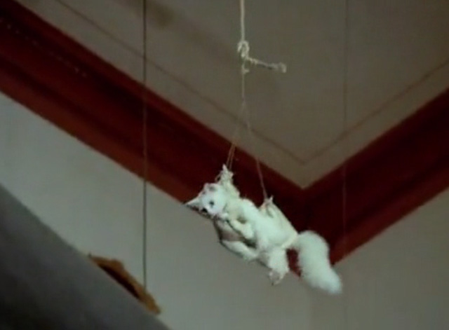 Hawaii Five-0 - King Kamehameha's Blues - white cat Sam being lowered by rope in harness