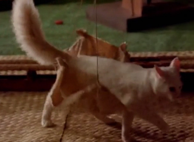 Hawaii Five-0 - King Kamehameha's Blues - white cat Sam steps out of harness on floor of museum