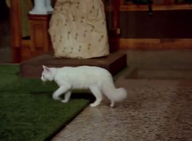 Hawaii Five-0 - King Kamehameha's Blues - white cat Sam stepping into museum exhibit