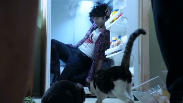 Hawaii Five-0 - Piko Pau'ioli - cats eating food off floor in kitchen with man in refrigerator