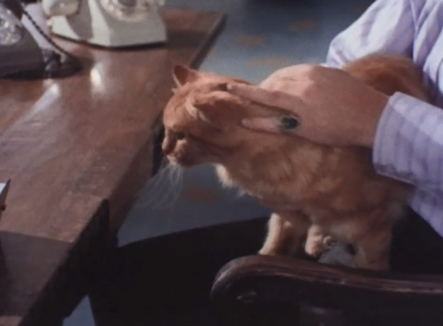 Jason King - That Isn't Me, It's Somebody Else - long-haired ginger tabby cat sitting on lap of Bonisalvi George Murcell