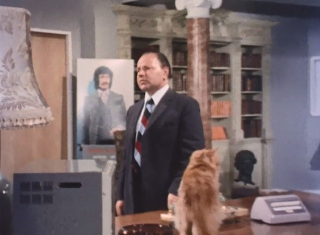 Jason King - That Isn't Me, It's Somebody Else - long-haired ginger tabby cat standing on desk