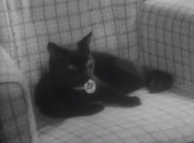 The Larkins - Cat Happy - black cat Blackie sitting on chair