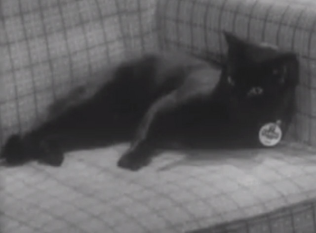 The Larkins - Cat Happy - black cat Blackie lying on chair