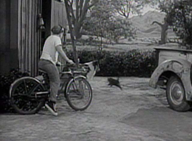 Lassie - Superstition black cat crosses Lassie's path