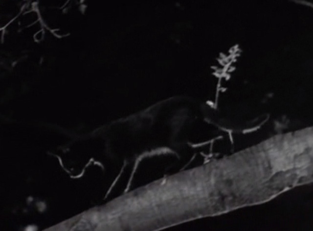 Leave it to Beaver - Cleaning Up Beaver - black cat walking on tree branch