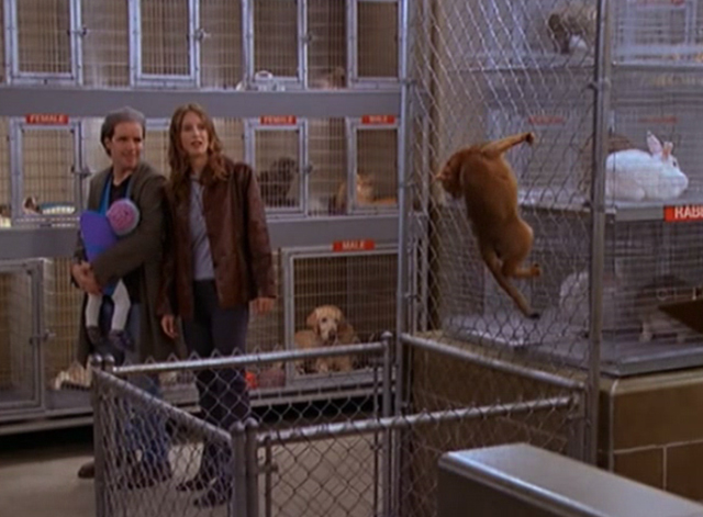 Mad About You - There's a Puma in the Kitchen - Lisa Anne Ramsay and Ira John Pankow watch cat puma climbing on chain link fence